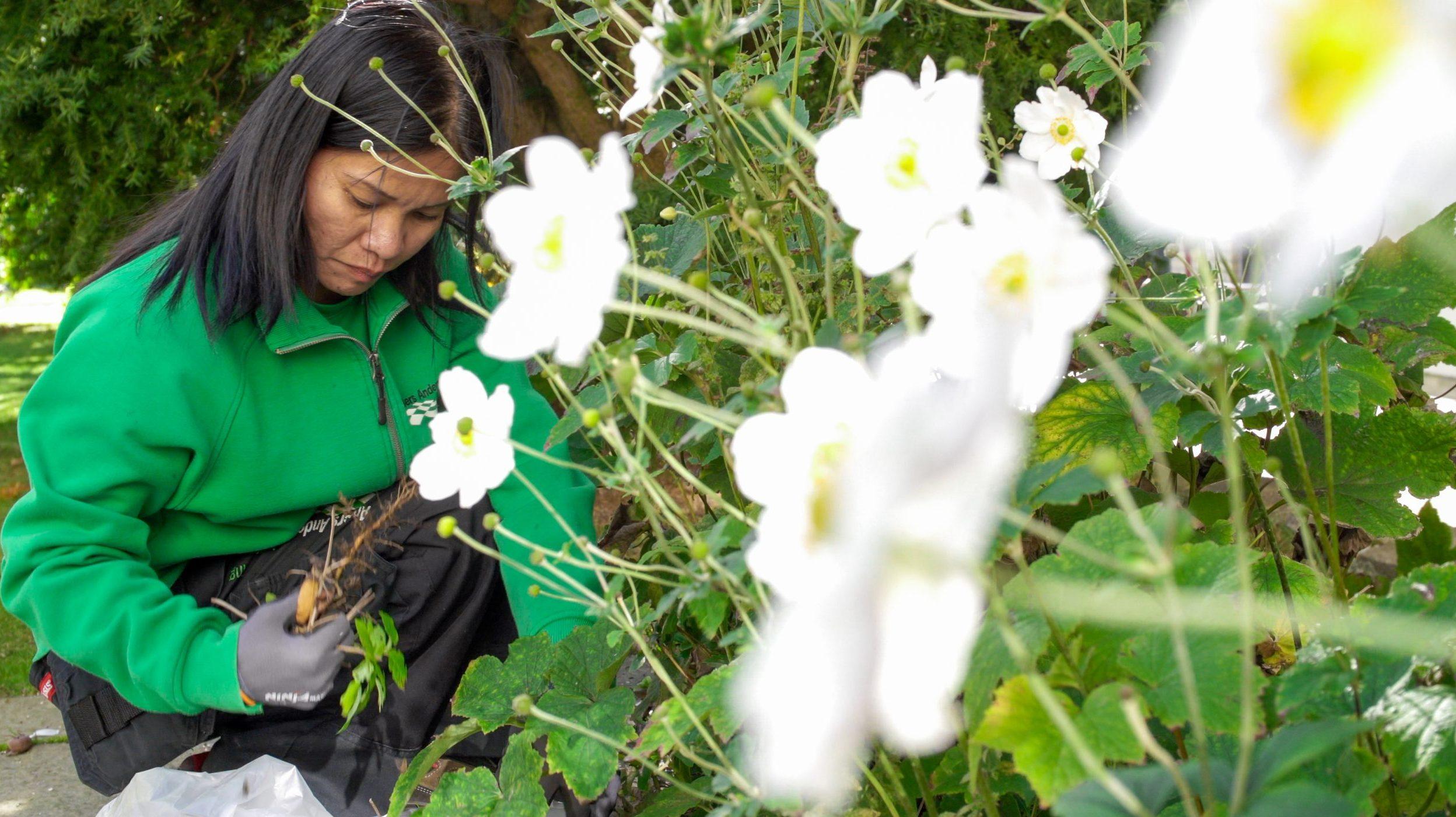 """Featured image for """"Efteråret er den bedste tid på året til at plante og pleje i haven"""""""